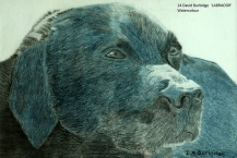 14-David-Burbidge--'LABRADOR'