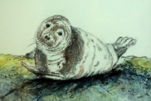 151--Susan-Wood--'SEAL-PUP'