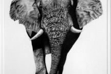 129-Carol-Watts-AFRICAN-BULL-ELEPHANT