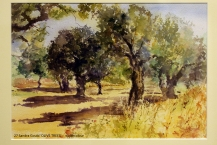 27-Sandra-Gould-OLIVE-TREES