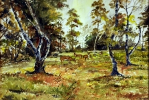 81-Fred-Mason-DEER-ON-CANNOCK-CHASE